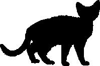 Devon-Rex-Umriss